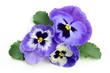Fototapeten,hintergrund,blühen,blühen,blau