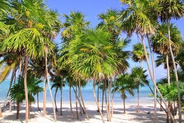Chit palm tree in caribbean tropical beach