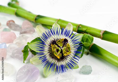 Fototapeten,passion flower,passiflora,bambu,blume