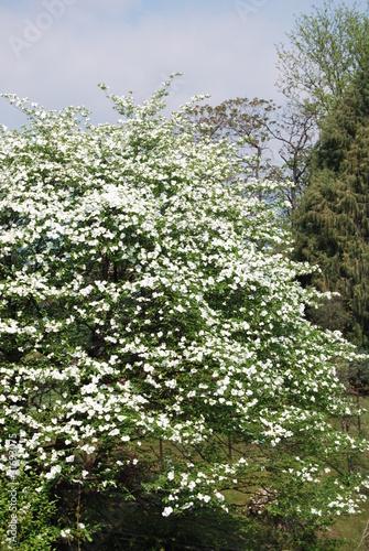cespuglio di fiori bianchi di antonella1969 foto stock