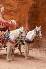 Pferdegespann in Petra