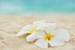 Fototapeten,frangipani,stranden,meer,blume