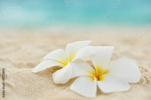 In de dag Frangipani Tempelblume am Strand