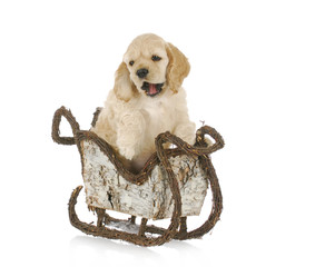puppy in christmas sleigh