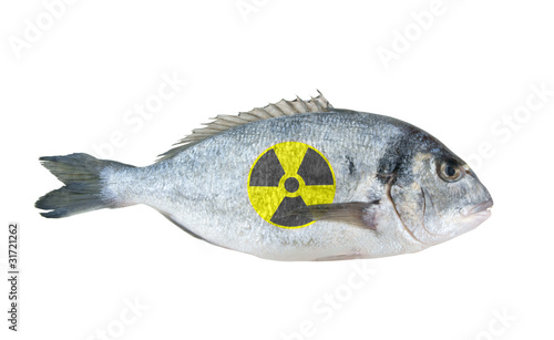 Radioactive dorado fish isolated on white background
