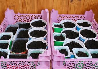 Рассада овощей для посева в грунт. Весенние заботы