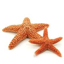 Deux étoiles de mer