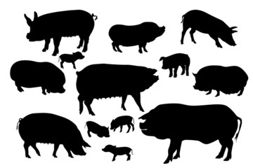 pigs and boars silhouettes set on white