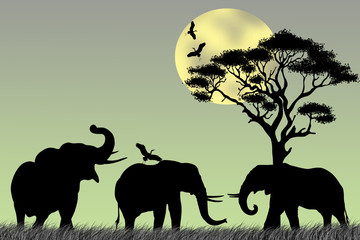 Group of elephant in africa on sunrise background