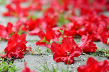 Red flowers on the road