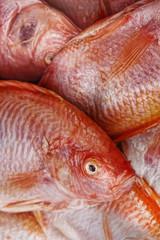 Tilapia roja bacalao