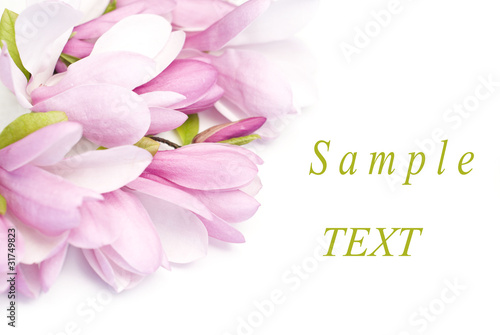 Fotobehang Magnolia Bouquet of magnolia flowers isolated on white background