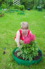 Woman puts flowers astilba