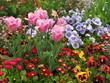 Rosa Tulpen und andere Frühlingsblumen