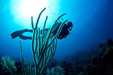 Scuba diver on a tropical reef