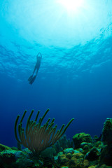 Freediving from a tropical reef in Honduras