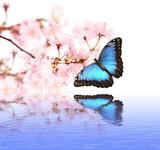 Fototapete Schön - Schönheit - Insekten
