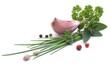 Gartenkräuter, Knoblauch