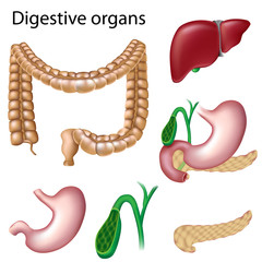 Digestive organs isolated, eps8