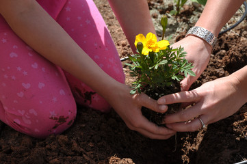 Girl Hands and Arms Planting Yellow Flower