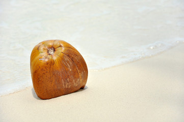 Kokosnuss im Meer