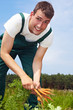 Bauer bei der Karottenernte