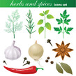 herbs and spices set