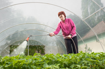 woman watering  Seedling