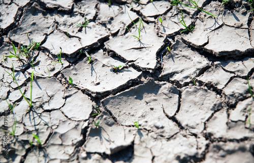 Deurstickers Droogte vertrocknete Erde und Gras