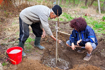 Senior farmer and daughter planting trees