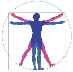Der Mensch - Körper