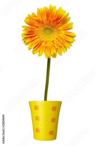 Papiers peints Marguerites flower nature garden botany daisy bloom pot