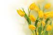 Tulip flowers border