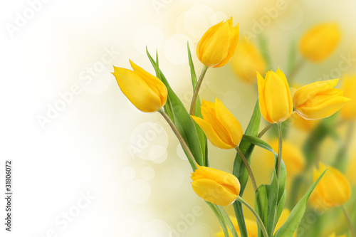 Fototapety, obrazy : Tulip flowers border