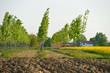 paesaggio campi 1705