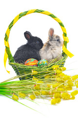 Bunnys in Easter basket with colorful Easter eggs