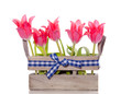 pink red tulips in a wooden crate with blue white checked ribbon