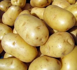 Pommes de terre à l'étal du marché