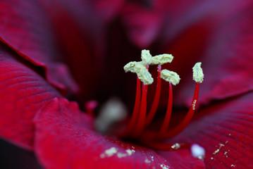 fleurs en Hollande