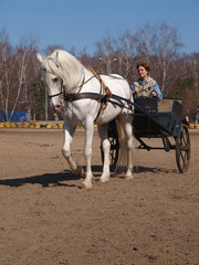 Cart with a white horse