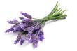 Leinwanddruck Bild - lavender