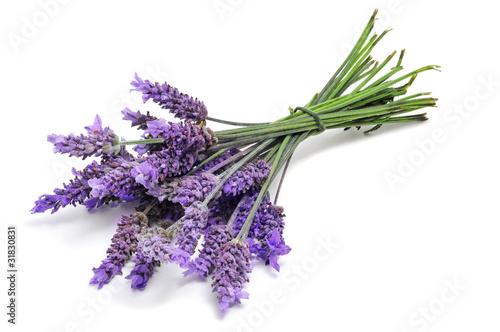 Foto op Aluminium Lavendel lavender