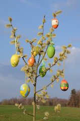 easter eggs on spring willow tree