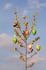 Easter eggs on spring tree with pussy willow