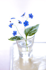 Tiny blue flower (Brunnera macrophylla)