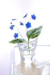 Tiny blue flower (Brunnera macrophylla)