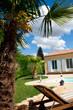 Vue sur palmier et piscine
