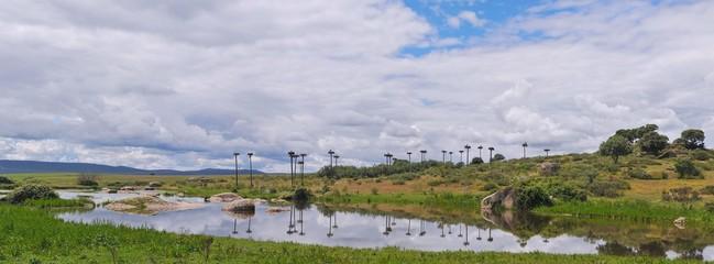 Colonia de cigueñas en Los Barruecos.