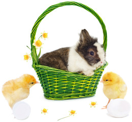 rabbit in green basket with narcissus and chickens