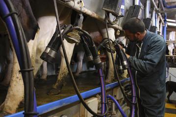 Agriculteur-éleveur pendant la traite